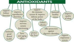 Benefits of Baobab Powder