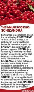 Benefits of Shizandra